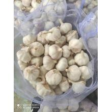 Cold Room Stocked Normal White Garlic