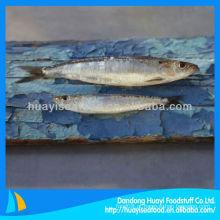 Melhor nova sardinha fresca congelada