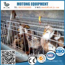 Los fabricantes de China producen equipos personalizados de cría de patos