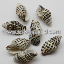 24-34MM Natural Shell Beads Black White Stripe Cowrie Beads