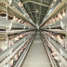 Nuevo diseño galvanizado caliente H tipo máquina de alimentación automática de la capa de diseño pollo jaulas jaula de pollo