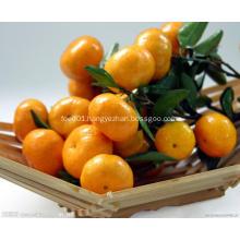 Nanfeng fresh sweet baby mandarin