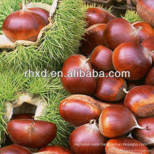 chinese bulk packing chestnut
