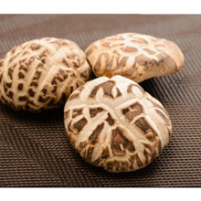 5,5 cm de champignons secs Shiitake, champignons déshydratés de fleurs blanches