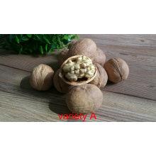 2020 New Crop Walnut 185 Walnut 32mm Xinjiang Walnut in Shell