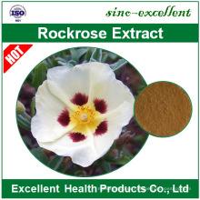 Cistus creticus-Extrakt Cistus ladanifer