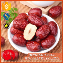 Wholesale high quality fresh jujube