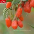 Завод питания новый harvet 100% ягоды годжи порошок