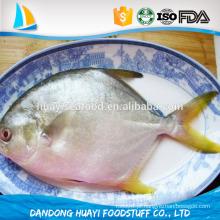 Frutos do mar IQF congelados pompano peixe fornecedor