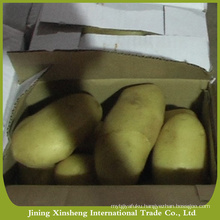 New cropped large potato