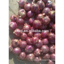 fresh vegetable specification