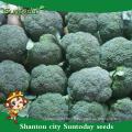Suntoday semences de jardin catalogue légumes F1 achat de graines bio en ligne graines de brocoli heriloom (A42001)