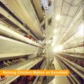 Tianrui diseño galvanizado malla de alambre A marco H marco jaula de pollo