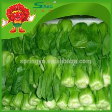 Feuille de transport cryogénique de légumes verts chinois sans pollution Pakchoi