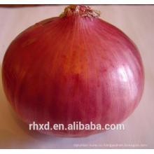 Свежий красный лук для продажи