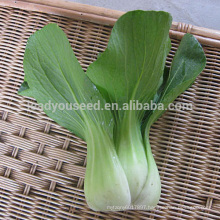PK06 JP no.1 high temperature resistant pakchoi seeds, different types of pakchoi seeds for planting