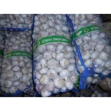 Fresh Pure White Garlic Red Garlic Chinese Supplier