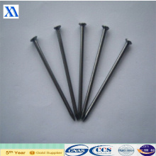 Manufacturer of Polished Common Nails (XA-CN3)