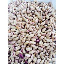 Approvisionner des haricots minuscules légers 2014 Nouvelle culture