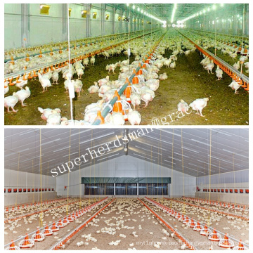 Auto Poultry Housing Equipemnt for Broiler Chicken