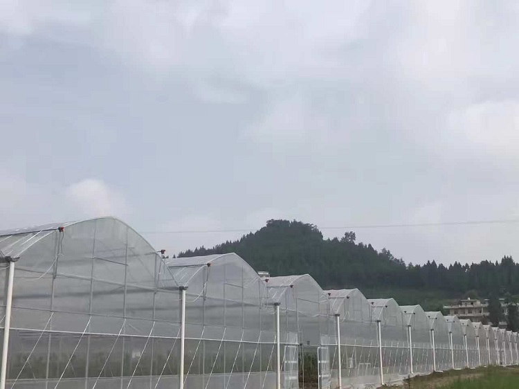 multi span greenhouse (4)