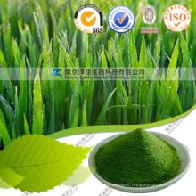 Wholesale Barley Grass Powder Health Care Product