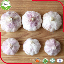 Good Price Normal White Garlic 4.5-5.0 5.0-5.5 5.5-6.0cm