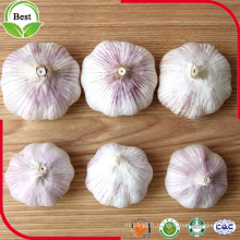 Bon Price Normal White Garlic 4.5-5.0 5.0-5.5 5.5-6.0cm