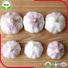 Bom preço Alho Branco Normal 4.5-5.0 5.0-5.5 5.5-6.0cm