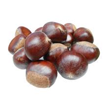 New Crop Organic Bulk Fresh Chestnuts for sale