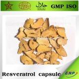 polygonum cuspidatum root extract resveratrol powder