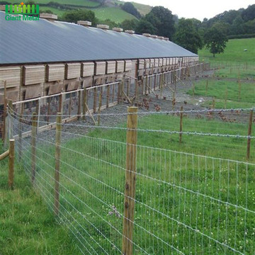 Hinge Joint Woven Galvanized Farm Field Wire Fence