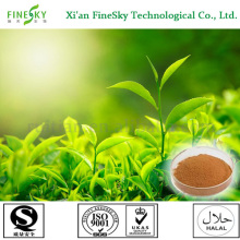 tea polyphenol capsule,green tea extract capsules,tea polyphenol antioxidant