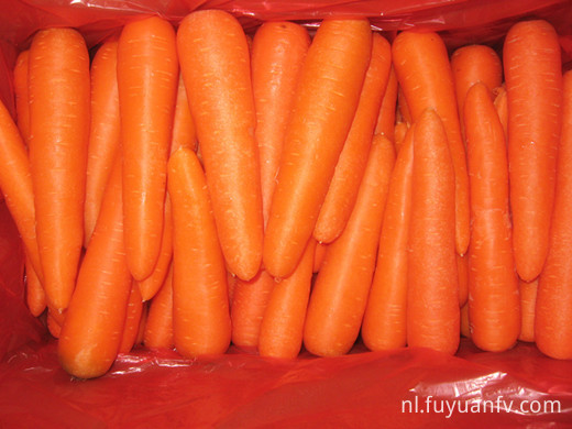 2018 crop fresh Carrot