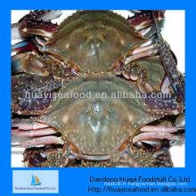 IQF congelé du crabe entier