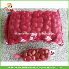 High Quality Fresh Chestnut