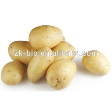 Dehydrated Potato Granule