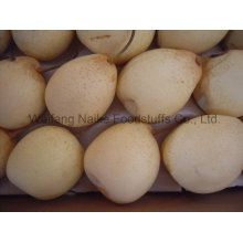 Fresh Pear / Chinese Fruits of High Quality (36.40.44.48)