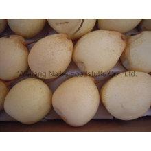 Frische Birne / chinesische Früchte von hoher Qualität (36.40.44.48)