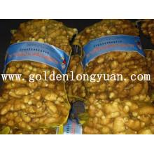 Gingembre frais emballé dans un sac en maille de 20 kg pour le marché du Bangladesh