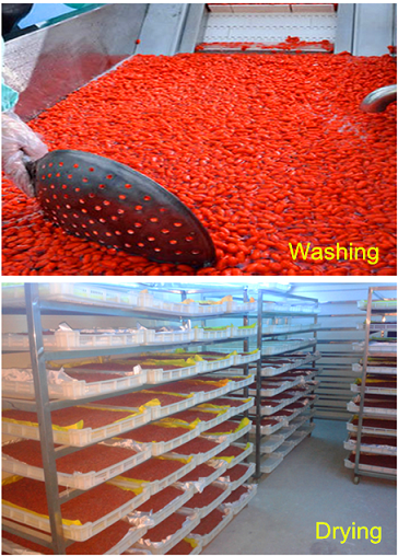 Goji washing&Drying