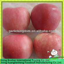 China estrella roja manzana proveedor