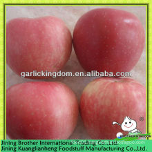 China apple red star supplier