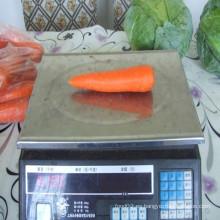 2016 Shandong zanahorias frescas con el precio más bajo