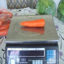 2016 свежей моркови Шаньдун с самым низким ценой