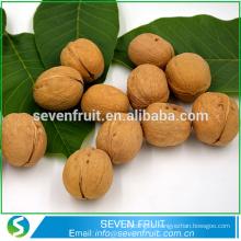 Vente en gros de porcelaine bon marché à l'exportation de noix de fruits secs en coquille
