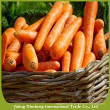 China, fresco, cenoura