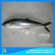 frozen Japanese spanish mackerel price