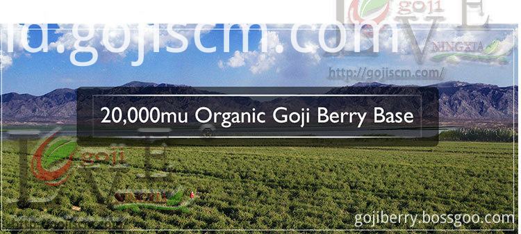 Factory Price Organic Goji Berry base
