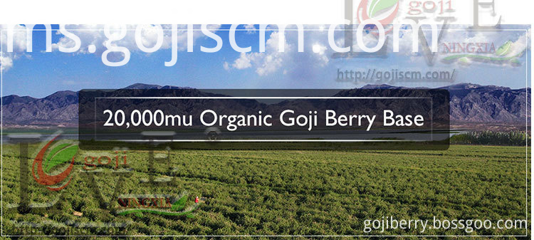 NINGXIA DRIED GOJI BERRY base